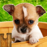 Dogs Jigsaw Puzzles Game 🐶 APK MOD 28.3