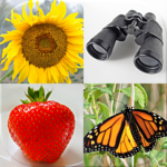Easy Pictures and Words – Photo-Quiz with 5 Topics APK MOD 3.1.0